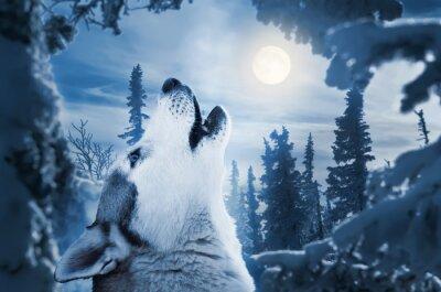 Fotomural uivando para a lua