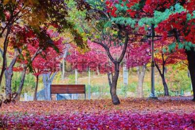Fotomural Um banco em um parque com muitas folhas da árvore de bordo vermelho. Lugar pacífico.