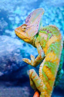 Fotomural Um camaleão verde