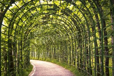 Fotomural Uma bela arcada verde no parque com um caminho.