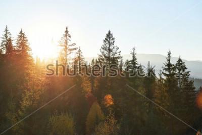 Fotomural Uma paisagem do outono da montanha com floresta colorida. Folhas de outono dramáticas da cena da manhã, como vermelhas e amarelas. Lugar da posição Cárpatos, Ucrânia, Europa.