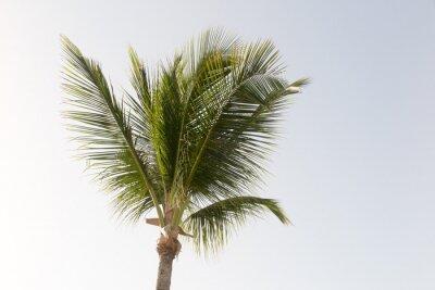 Fotomural Uma palmeira de coco e um céu azul