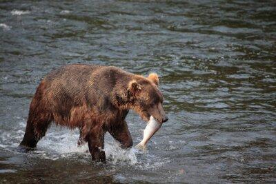 Fotomural Urso de pesca