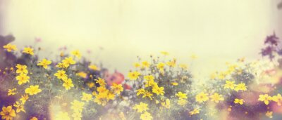 Fotomural Várias flores coloridas da mola na luz solar, borrão, bandeira para o Web site, beira