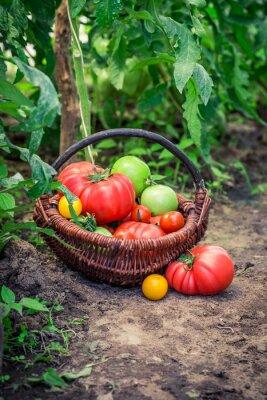 Fotomural Vários, tomates, chão