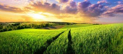 Fotomural Vasto, verde, campo, deslumbrante, pôr do sol, coloridos, panorâmico, paisagem