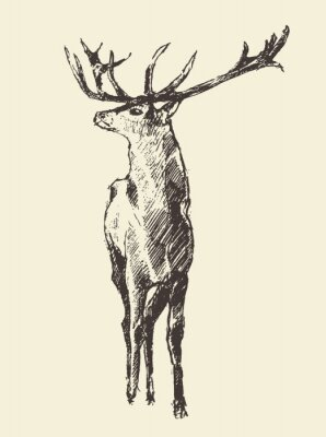 Fotomural Veado, gravura, vindima, Ilustração, vetorial