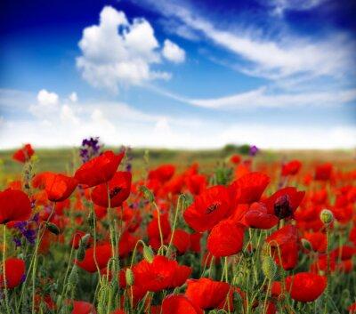 Fotomural verão, wildflowers