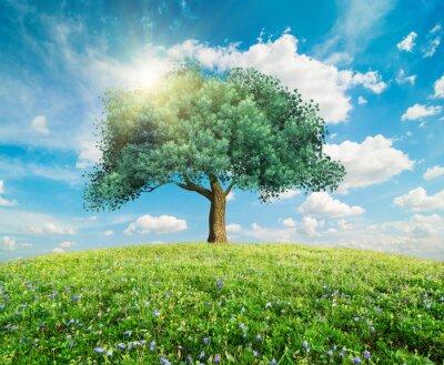 Fotomural Verde, árvore, primavera, paisagem
