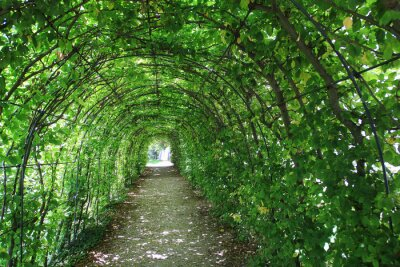 Fotomural Verde, túnel, jardim