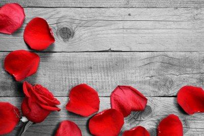 Fotomural Vermelho, rosa, pétalas, pretas, branca, madeira, fundo