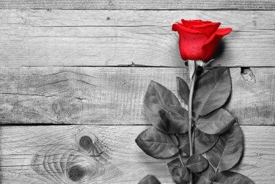 Fotomural Vermelho, rosÈ, pretas, branca, madeira, fundo