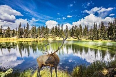 Fotomural Vermelho, veado, ramo, horns, custos, encantador, lago