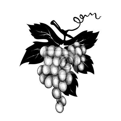vetor decoração uvas graphic ilustração vetorial uvas desenho