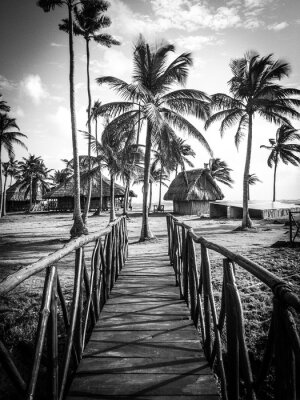 Fotomural Vida na ilha