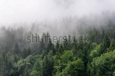 Fotomural Visão geral da floresta Evergreen - Top de altas árvores com denso nevoeiro rolando no deserto mais exuberante