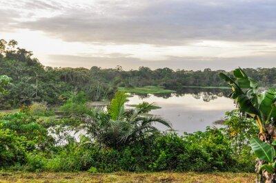 Fotomural Vista do lago na Floresta Amazônica, Manaos, Brasil