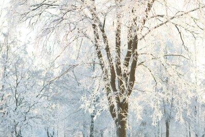Fotomural Wallpapers árvores com ramos de árvore fosco em um dia de inverno