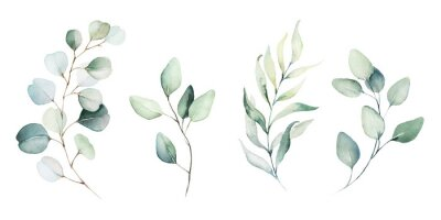 Fotomural Watercolor floral illustration set - green leaf branches collection, for wedding stationary, greetings, wallpapers, fashion, background. Eucalyptus, olive, green leaves, etc.