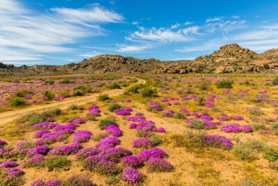 Fotomural Wildblumen em Südafrika