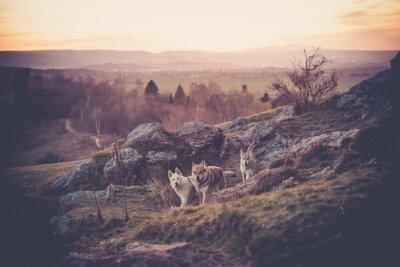 Fotomural Woflshundrudel checoslovaco livre correndo nas montanhas
