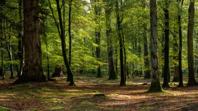 Fotomural Woodland walk in the new forest in Autumn