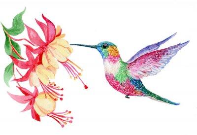 Fotomural Акварель, маленькая птичка колибри, иллюстрация