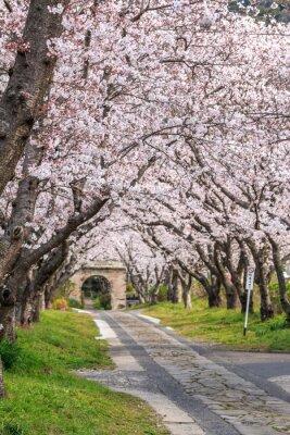 Fotomural 桜 の ア ー チ @ 佐賀 県 武雄 市