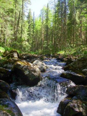 Fotomural O rio da montanha na floresta conífera, Горная река в хвойном лесу