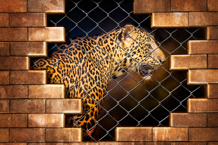 Fotomural Young leopard internal the cage in concept of resist torture and torture the wildlife