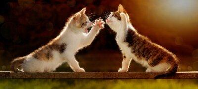 Fotomural Zwei junge Katzen spielen auf einem Holzbrett em Gegenlicht
