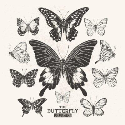 Poster A coleção da borboleta do vintage