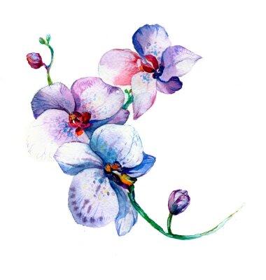 Poster A, Novo, vista, orquídea, aquarela, mão, desenhado, para, cartão postal, isolado, ligado, a, branca, fundo
