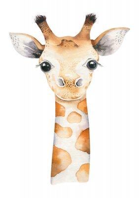 Poster A poster with a baby giraffe. Watercolor cartoon giraffetropical animal illustration. Jungle exotic summer print.