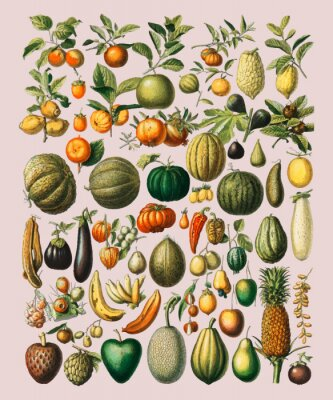 Poster A vintage illustration of a wide variety of fruits and vegetables from the book, Nouveau Larousse Illustre (1898), by Larousse, Pierre, Augé and Claude, Digitally enhanced by rawpixel.