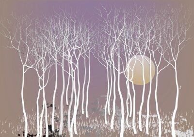 Poster Abstratos, floresta, árvores, saída, licença, lua, noturna, tempo, visão, branca, árvore