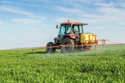 Poster Agricultor, Pulverização, verde, trigo, campo