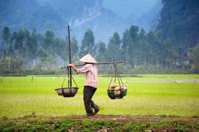 Poster Agricultor vietnamita no campo de arroz em Ninh Binh, Tam Coc. Agricultura biológica na Ásia