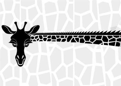 Poster Animais selvagens