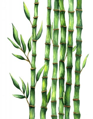 Poster Aquarela de ilustração de bambu desenhada de mão