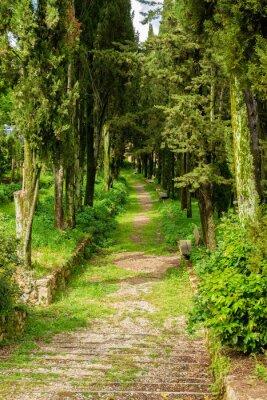 Poster arborizada avenida verde