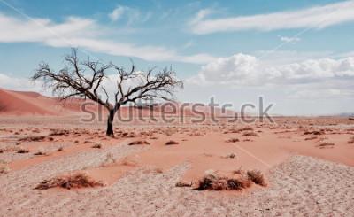 Poster Árvore do deserto