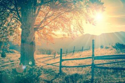 Poster Árvore do outono do vintage no por do sol com raios de sol, montanhas