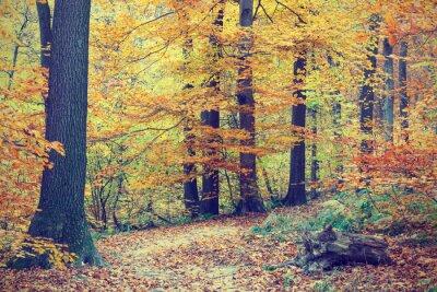 Poster Árvores de outono coloridas na floresta, look vintage