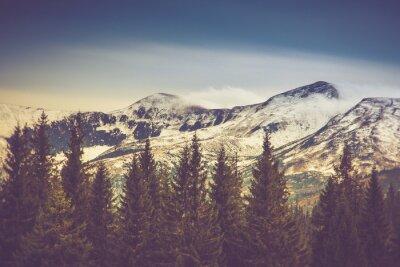 Poster Árvores do outono na floresta e montanha coberta de neve na distância.