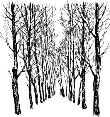 Poster Árvores no parque do inverno