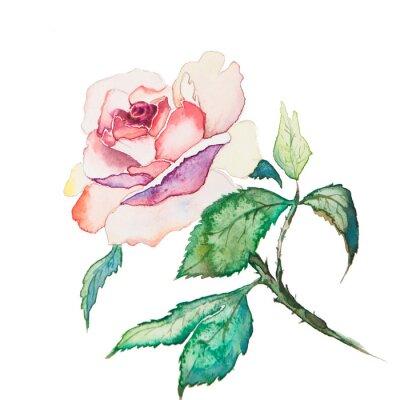 Poster As aguarelas flores da primavera isolado no fundo branco