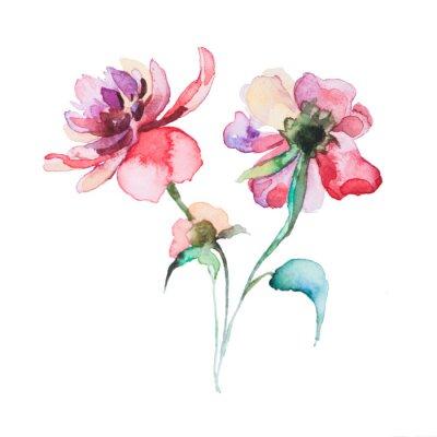 Poster as aquarelas flores da primavera isolado no fundo branco
