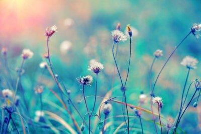 Poster Azul, erva, campo, amanhecer