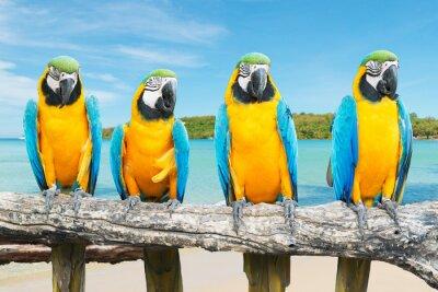 Poster Azul, ouro, arara, tropicais, bonito, praia, mar